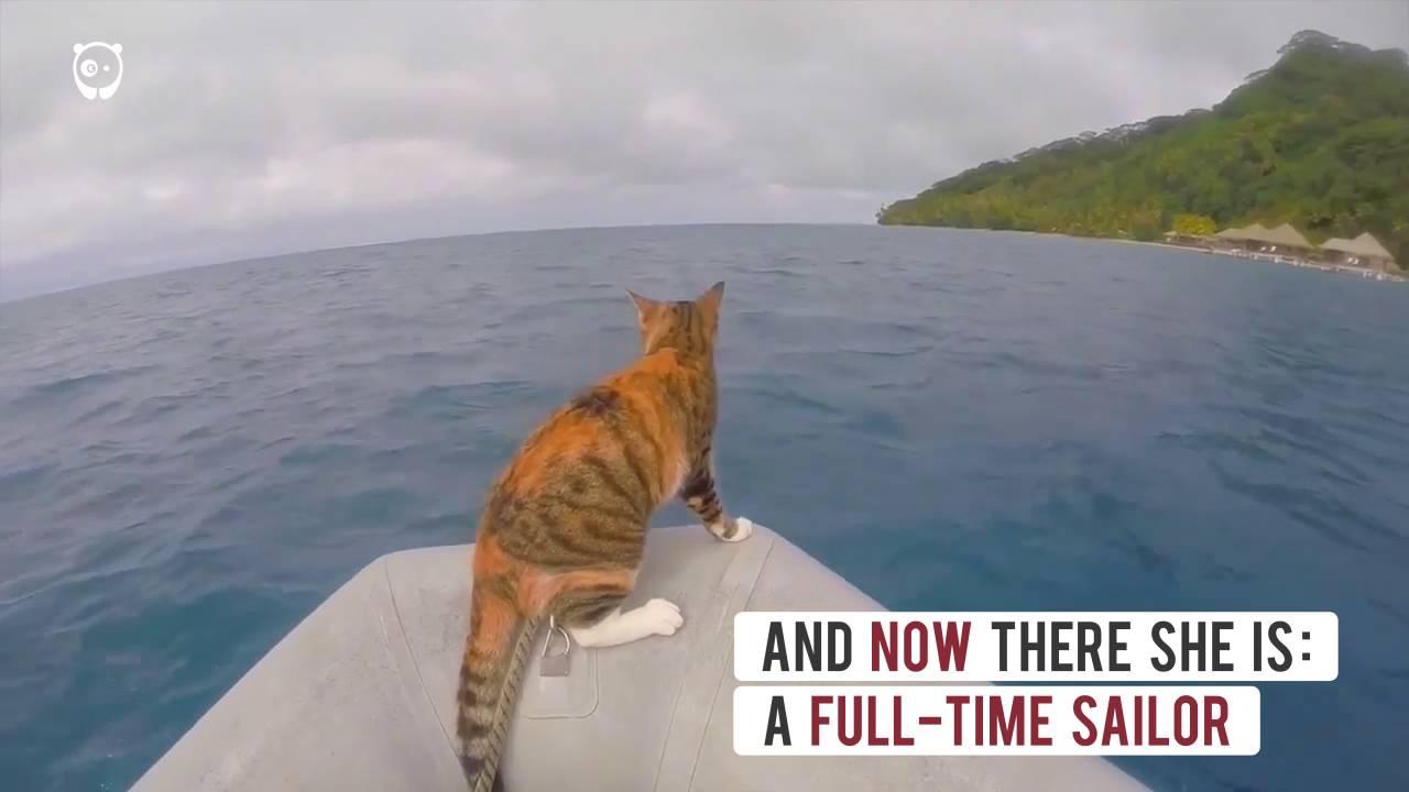 Żeglujący kot na rejsie morskim